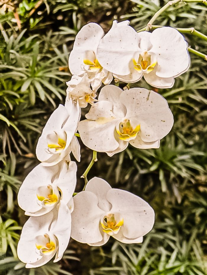 http://www.moradimoveis.com.br/fotos_imoveis/12701/DSC09966.jpg
